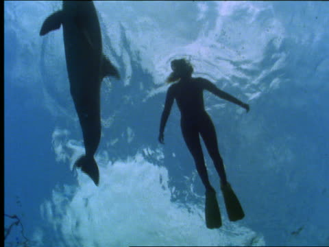 underwater slow motion silhouette of scuba diver swimming near dolphins - cetaceo video stock e b–roll