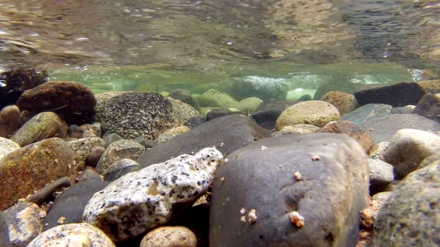 underwater small rushing stream 2 elkhorn mountains oregon wallowa 87 - pacific northwest usa stock videos & royalty-free footage