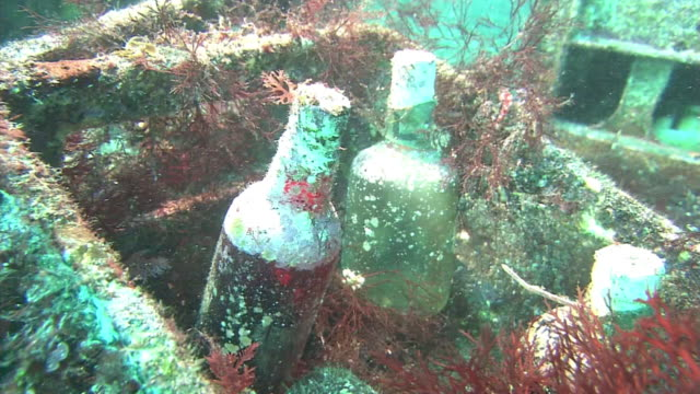vídeos de stock, filmes e b-roll de underwater, stored alcohol bottles, izu oshima, japan - molusco invertebrado