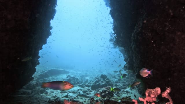 underwater submerged cave diving vacation - scuba diver point of view stock videos & royalty-free footage