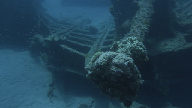 underwater, sunk vessel and small fish in ogasawara, japan - wrack stock-videos und b-roll-filmmaterial