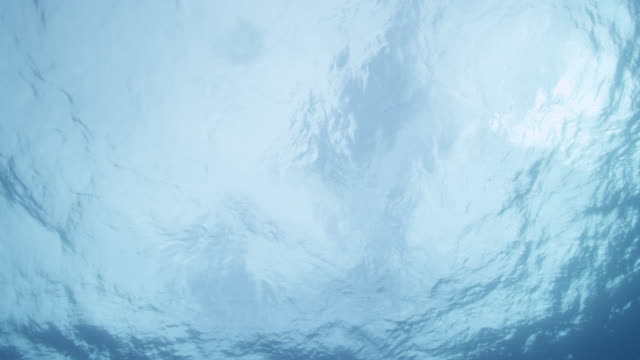 underwater surface of blue sea, azores - water surface stock-videos und b-roll-filmmaterial