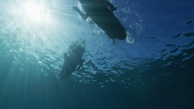 underwater surfer - tahiti stock videos & royalty-free footage