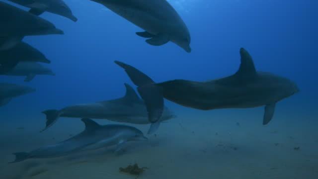 underwater ms track behind bottlenosed dolphins swimming above seabed  - cetacea bildbanksvideor och videomaterial från bakom kulisserna