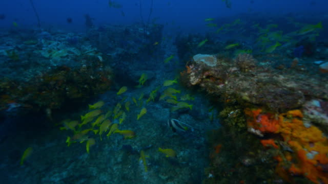 underwater track over lit reef with shoals of fish - エンゼルフィッシュ点の映像素材/bロール