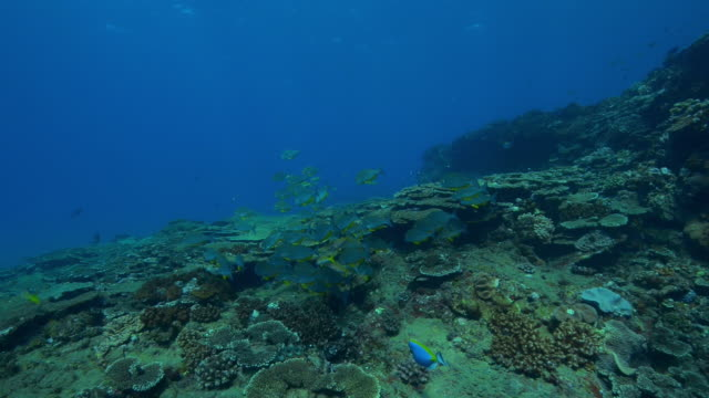 Underwater track over reef with shoal of fish
