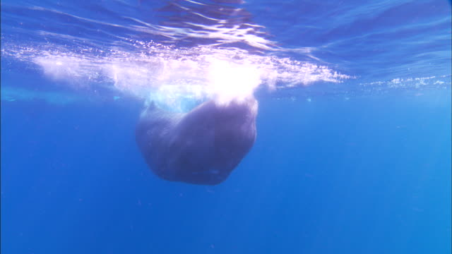 Underwater track towards Sperm whale