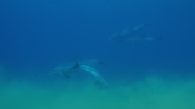 underwater track with bottlenosed dolphins scraping on seabed - クジラ目点の映像素材/bロール