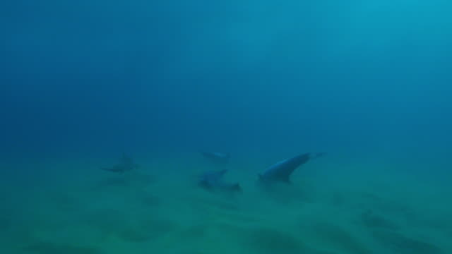 underwater track with bottlenosed dolphins swimming and scraping through sand on seabed - cetacea stock videos & royalty-free footage