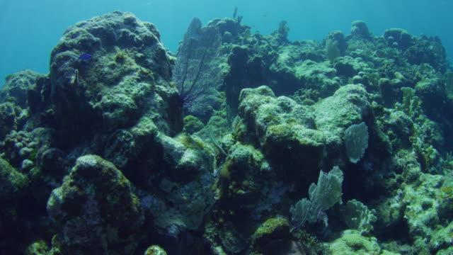 underwater ha track with pipefish swimming over coral reef - ヨウジウオ科点の映像素材/bロール