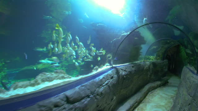 Underwater tunnel at Sea Life London Aquarium.