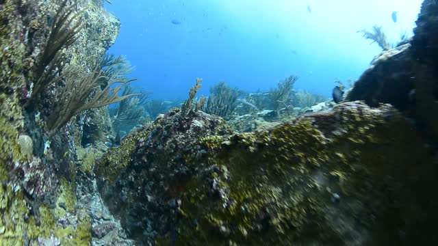 underwater tunnel - ゴーゴニアンコーラル点の映像素材/bロール