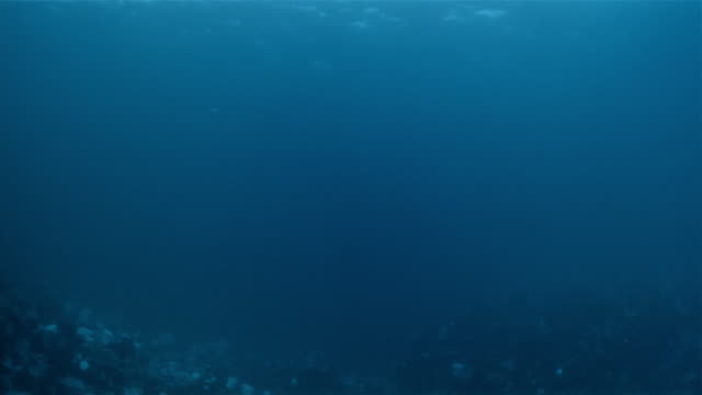 stockvideo's en b-roll-footage met pov, underwater vehicle deep rover in pacific ocean, usa - oceaanbodem