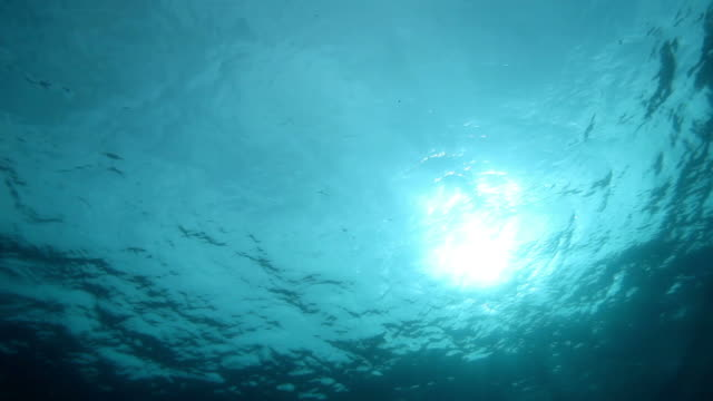 underwater - undersea stock videos & royalty-free footage