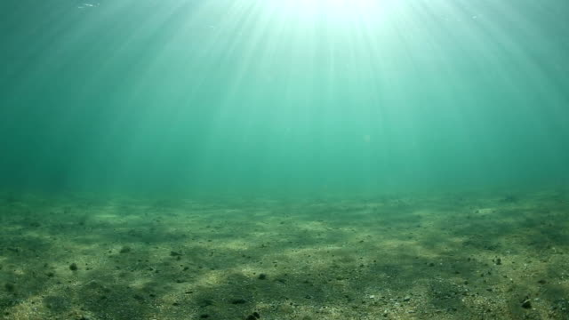 underwater - ravine stock videos & royalty-free footage