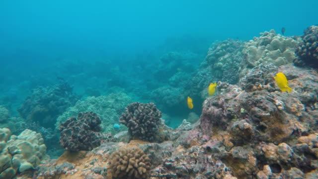 underwater - state park stock videos & royalty-free footage