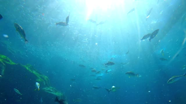 underwater view for school of fish - undersea stock videos & royalty-free footage