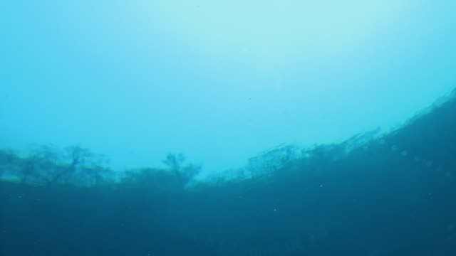 360 underwater view of a cenote.