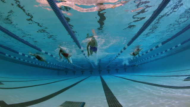 vídeos de stock e filmes b-roll de underwater view of a female professional swimmer racing freestyle and touching the wall at the end of the swimming lane during a swim meet in an indoor olympic sized swimming pool - competição
