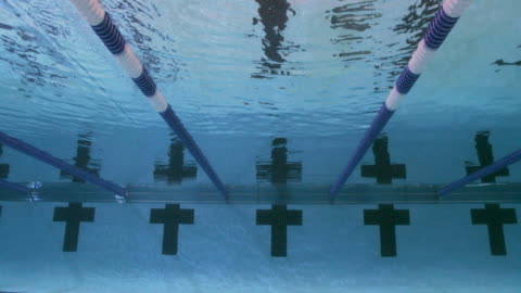 underwater view of a line of female professional swimmers diving into the water and racing freestyle during a swim meet in an indoor olympic sized swimming pool - competition stock videos & royalty-free footage