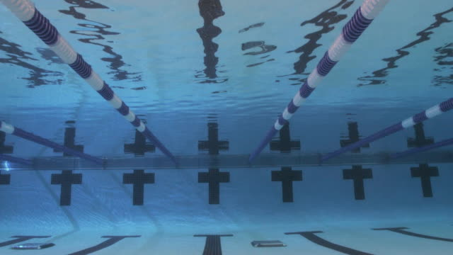 slo mo. underwater view of a line of professional swimmers diving into the water and racing freestyle during a swim meet in an indoor olympic sized swimming pool - sprung wassersport stock-videos und b-roll-filmmaterial