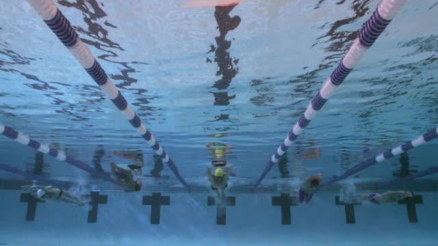 slo mo. underwater view of a line of professional swimmers racing freestyle during a swim meet in an indoor olympic sized swimming pool - butterfly stroke stock videos and b-roll footage