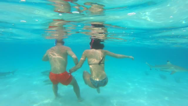 underwater view of a man and woman couple snorkeling in moorea tropical island with sharks and stingrays. - moorea stock videos & royalty-free footage