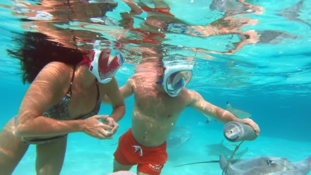 underwater view of a man and woman couple snorkeling in moorea tropical island with sharks and stingrays. - schnorchel stock-videos und b-roll-filmmaterial