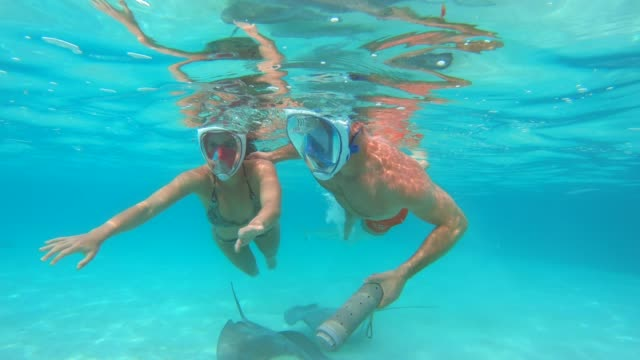 vídeos de stock, filmes e b-roll de underwater view of a man and woman couple snorkeling in moorea tropical island with sharks and stingrays. - polinésia francesa