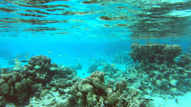 underwater view of a man and woman couple snorkeling swimming around scenic tropical islands. - south pacific ocean stock videos and b-roll footage