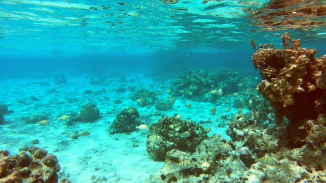 vidéos et rushes de underwater view of a man and woman couple snorkeling swimming around scenic tropical islands. - océan pacifique sud
