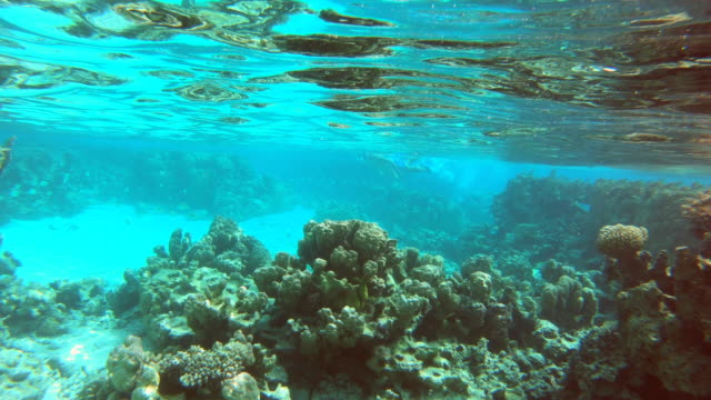 Underwater view of a man and woman couple snorkeling swimming around scenic tropical islands.