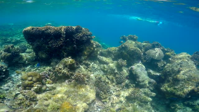 pov underwater view of a scenic coral reef and fish. - slow motion - 若い女性だけ点の映像素材/bロール