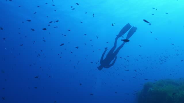 vídeos y material grabado en eventos de stock de vista submarina de un buceador buceando a través de una escuela de peces y de vuelta a la superficie - buceo con equipo