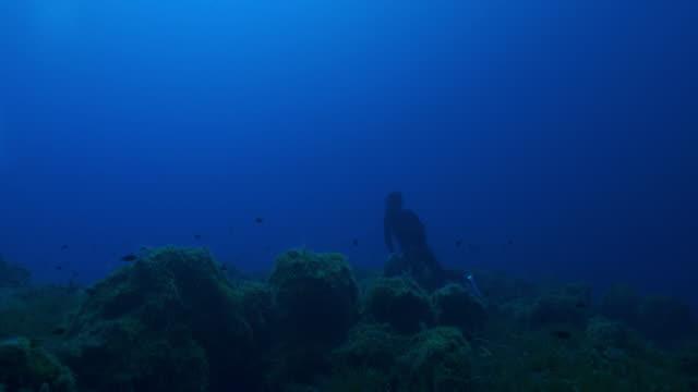 vídeos y material grabado en eventos de stock de vista submarina de un buceador cerca de una escuela de peces nadando a la superficie - buceo con equipo