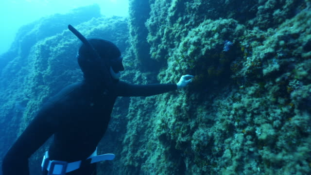underwater view of a scuba diver touching a reef and surfacing - surfacing stock videos & royalty-free footage