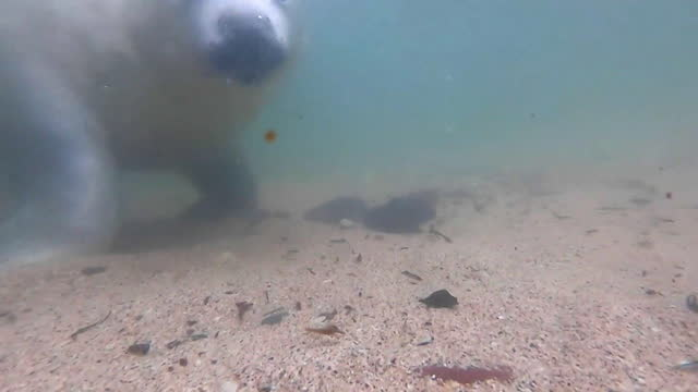 underwater view of a seal - seal animal stock videos & royalty-free footage