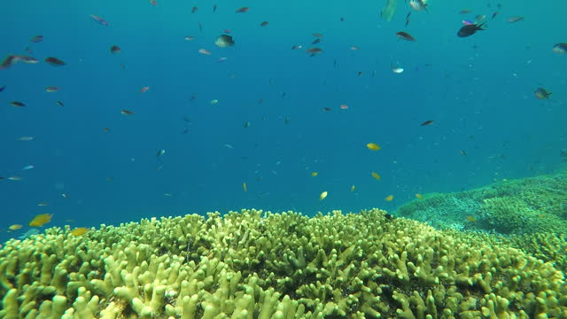 underwater view of coral reef and marine life and small fish - undersea stock videos & royalty-free footage