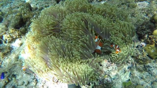 stockvideo's en b-roll-footage met onderwatermening van koraalrif en zeeleven en kleine vissen - kleine groep dieren