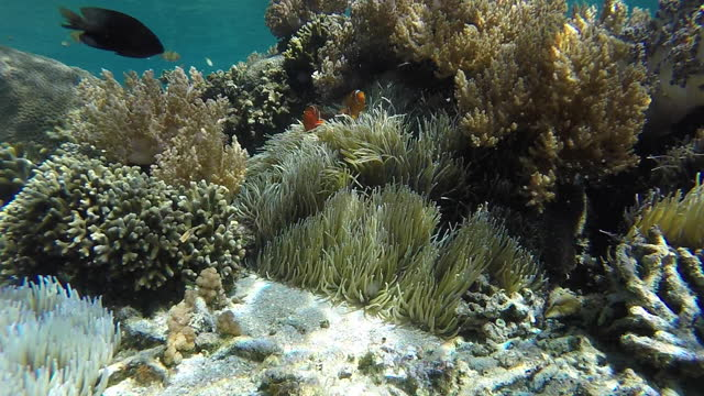 underwater view of coral reef and marine life - coral stock videos & royalty-free footage