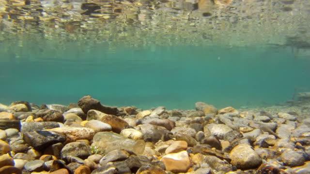 underwater view of creek - flowing water stock videos & royalty-free footage