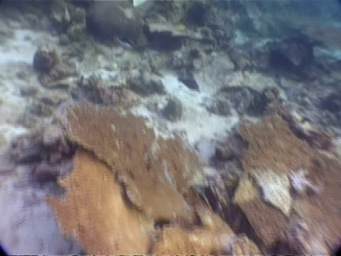 ms underwater view of damaged coral, from 2004 tsunami, similan islands, thailand - 2004 stock-videos und b-roll-filmmaterial