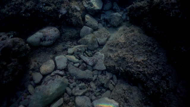 underwater view of dark seabed. slowmotion. particles in movement. - seabed stock videos & royalty-free footage