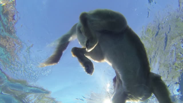 Underwater view of dog swimming in pool