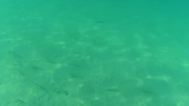 Underwater view of fish