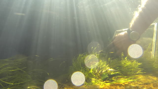 CU Underwater view of hands picking up grass and placing in net/ Western Cape/ South Africa