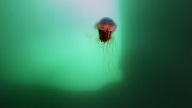 vídeos de stock e filmes b-roll de underwater view of iceberg with jellyfish - gelo picado