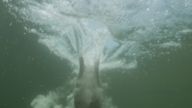 vídeos de stock e filmes b-roll de 4k slo mo: underwater view of man diving into body of water - subaquático