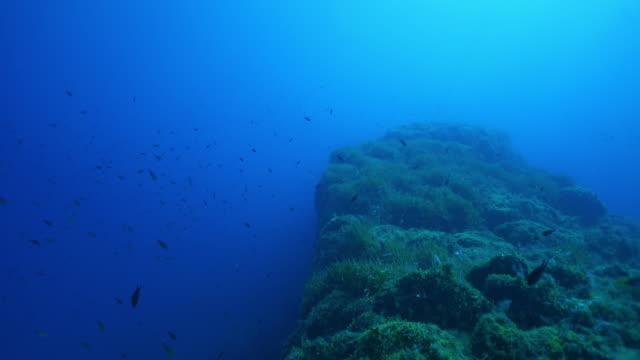 vista subacquea della scolarizzazione dei pesci marini vicino a una barriera corallina - branco di pesci video stock e b–roll
