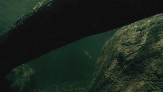 MS PAN Underwater view of paddle board gliding on surface / Aspen, Colorado, USA